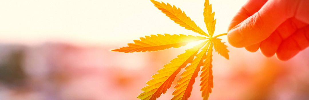 Buy Marijuana Online Canada