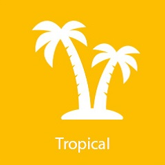 tropical-flavor