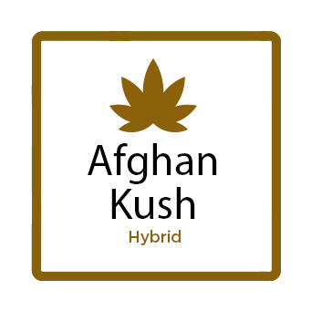 Medical Marijuana for Stress - Afghan Kush