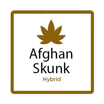 Best Marijuana for Stress - Afghan Skunk