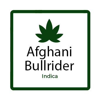 Buy marijuana for muscle spasms online - Afghani Bullrider