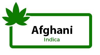Afghani - Indica