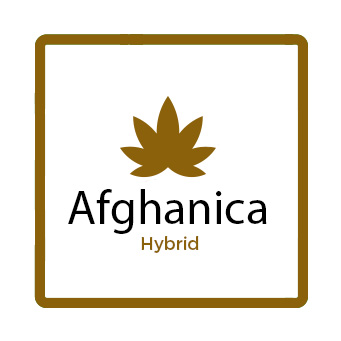 Best Marijuana for Stress - Afghanica