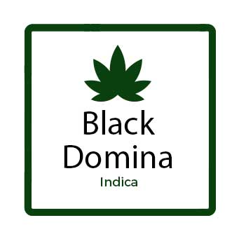 Best Weed for Nausea in Canada - Black Domina