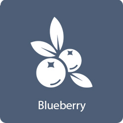 blueberry-flavor
