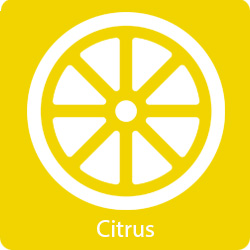 citrus-flavor