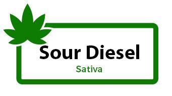 Sour Diesel - Sativa