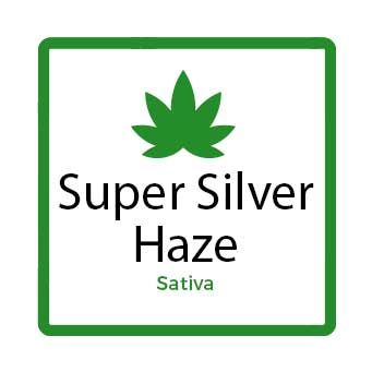 Medical Marijuana for Stress - Super Silver Haze