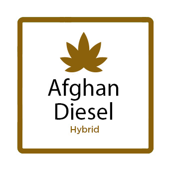 Medical Marijuana for Stress - Afghan Diesel