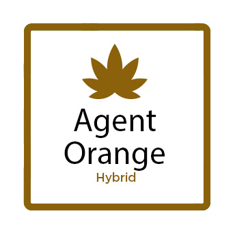 Best Weed for Fatigue - Agent Orange