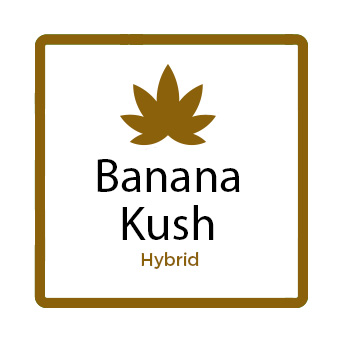 Buy Marijuana for Stress Online - Banana Kush