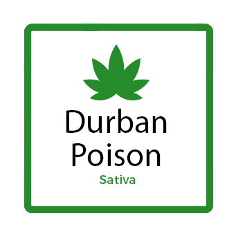 Best Marijuana for Fatigue - Durban Poison