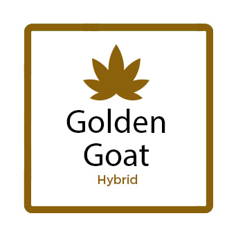 Golden Goat (Hybrid)