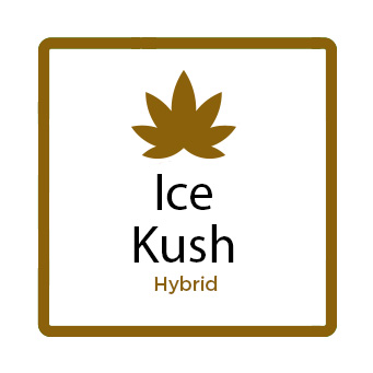 Best Marijuana for Depression Online - Ice Kush
