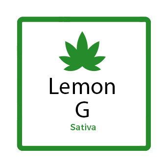 Medical Marijuana for Stress - Lemon G