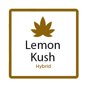 Medical Marijuana for Stress - Lemon Kush