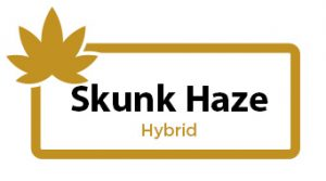 Skunk Haze