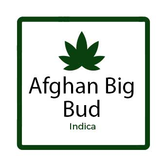 Buy Marijuana for Nausea Online - Afghan Big Bud
