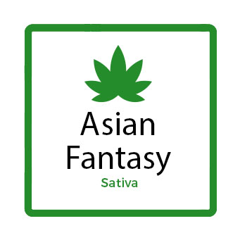 Best Marijuana for Stress - Asian Fantasy