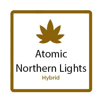 Best Marijuana for Stress - Atomic Northern Lights