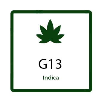 Best Weed for Arthritis in Canada - G13