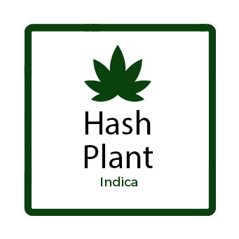 Medical Marijuana for Stress - Hash Plant