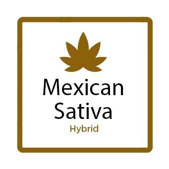 Best Weed for Fatigue - Mexican Sativa
