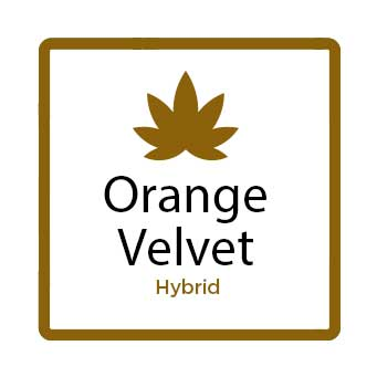 Medical Marijuana for Stress - Orange Velvet