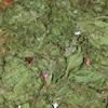 Afghooey Cannabis