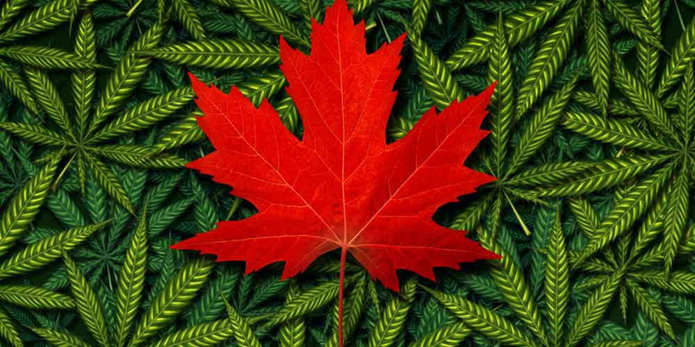 Cannabis Canada: The Future of Pot