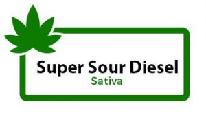 super-sour-diesel-sativa-parent