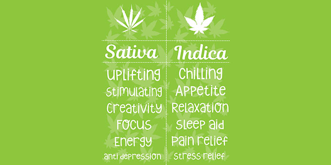 Difference between sativa and indica strains