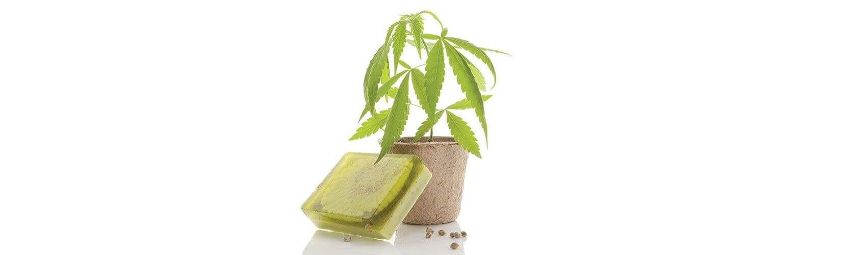 cannabis soap benefits