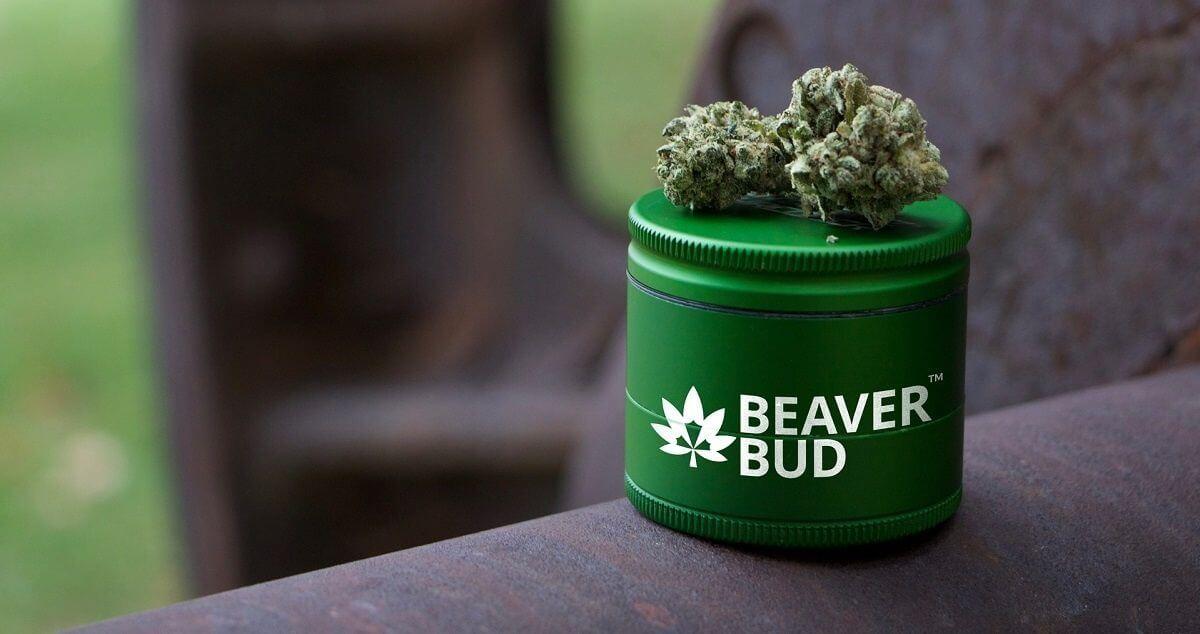 beaver Bud Store