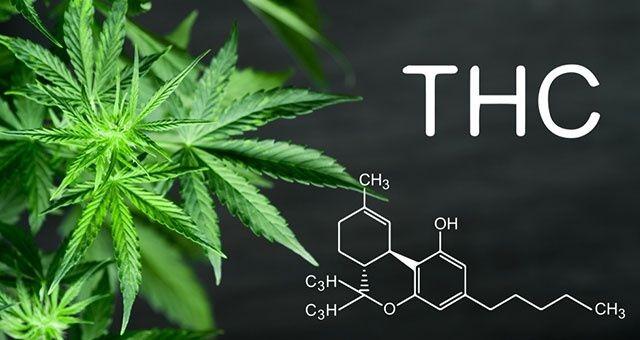 thc drug test