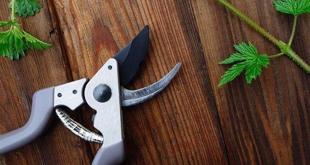 cloning marijuana - tools