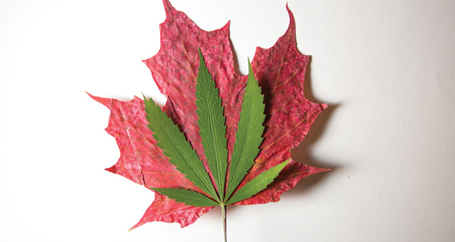 how much is a pound of weed in Canada