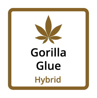 Gorilla Glue (Hybrid)