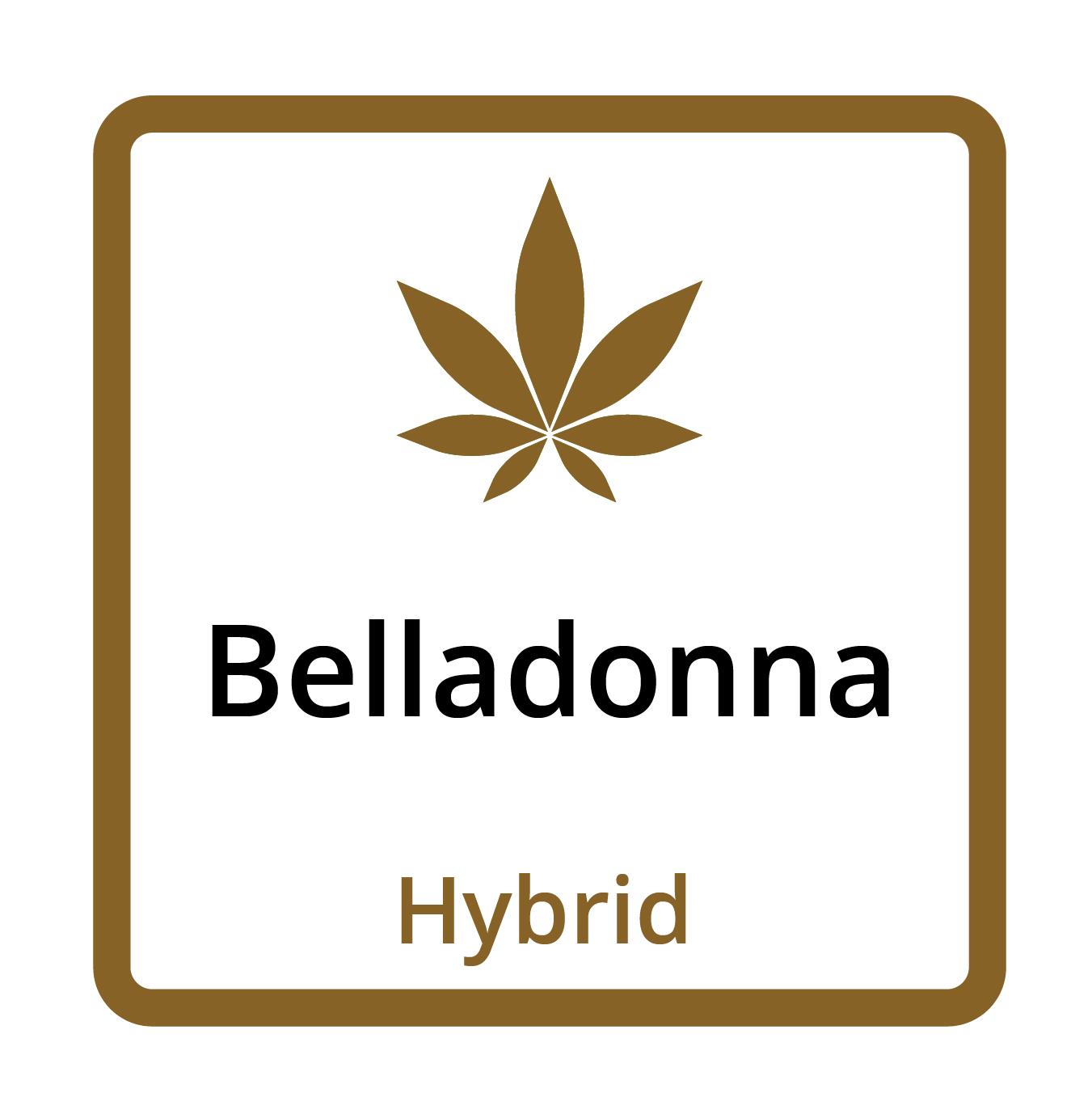 Belladonna (Hybrid)