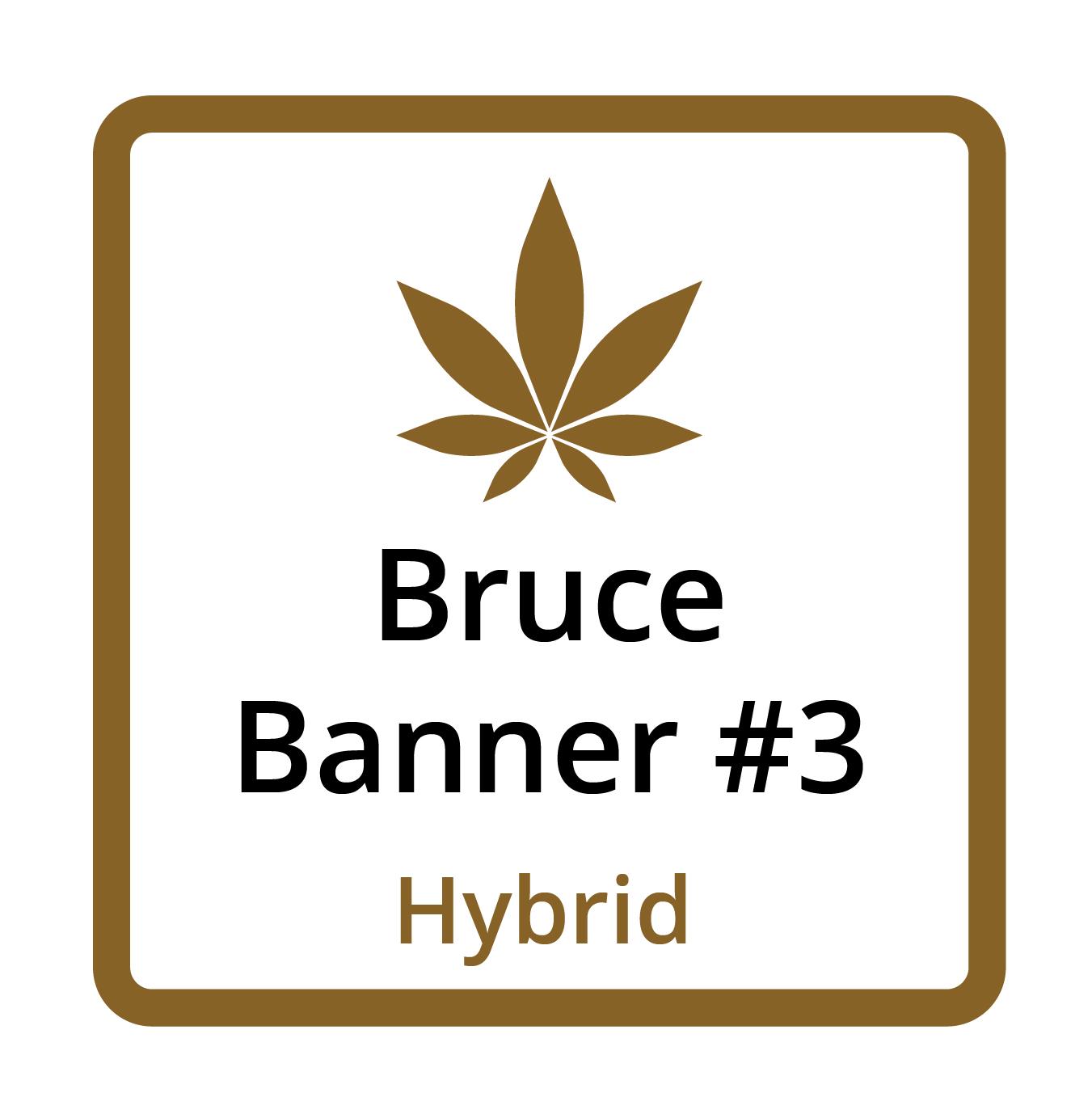 Bruce Banner #3 (Hybrid)