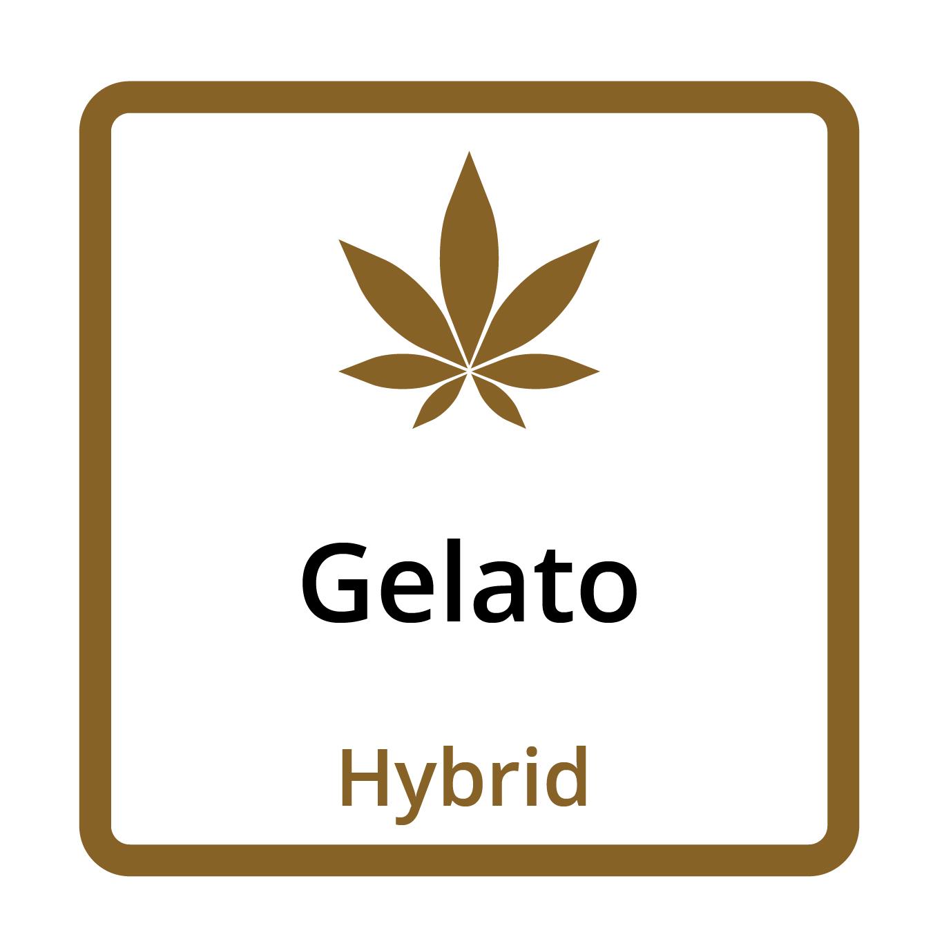 Gelato (Hybrid)