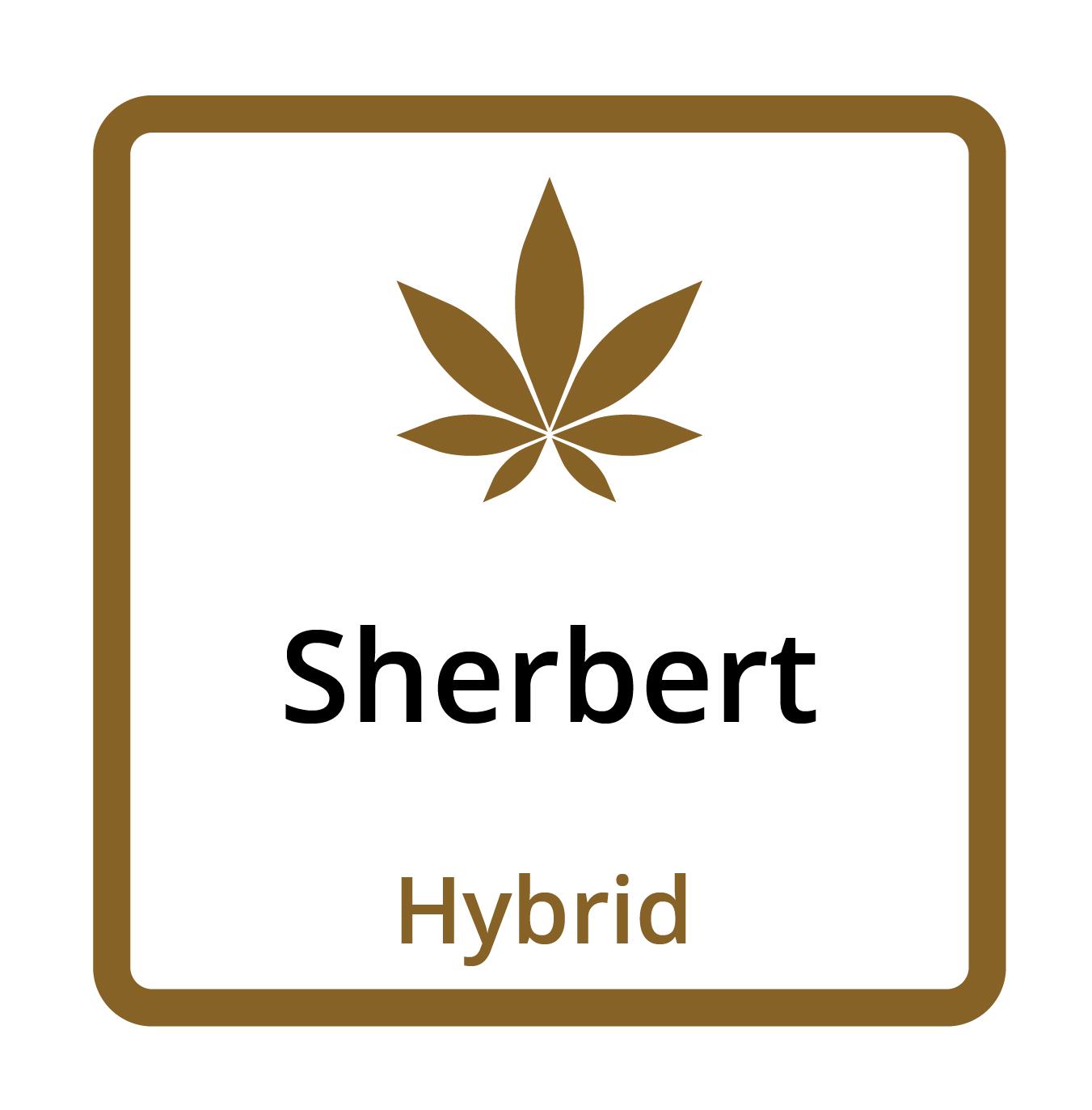 Sherbert (Hybrid)