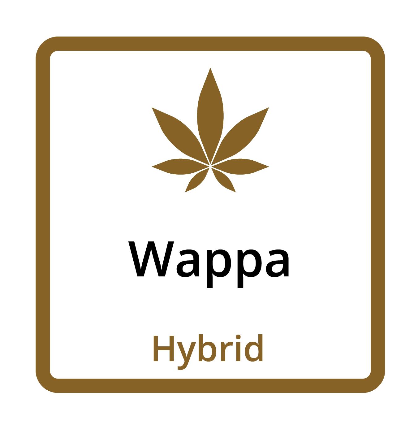 Wappa (Hybrid)