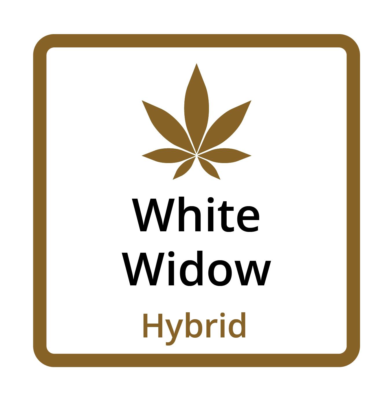 White Widow (Hybrid)