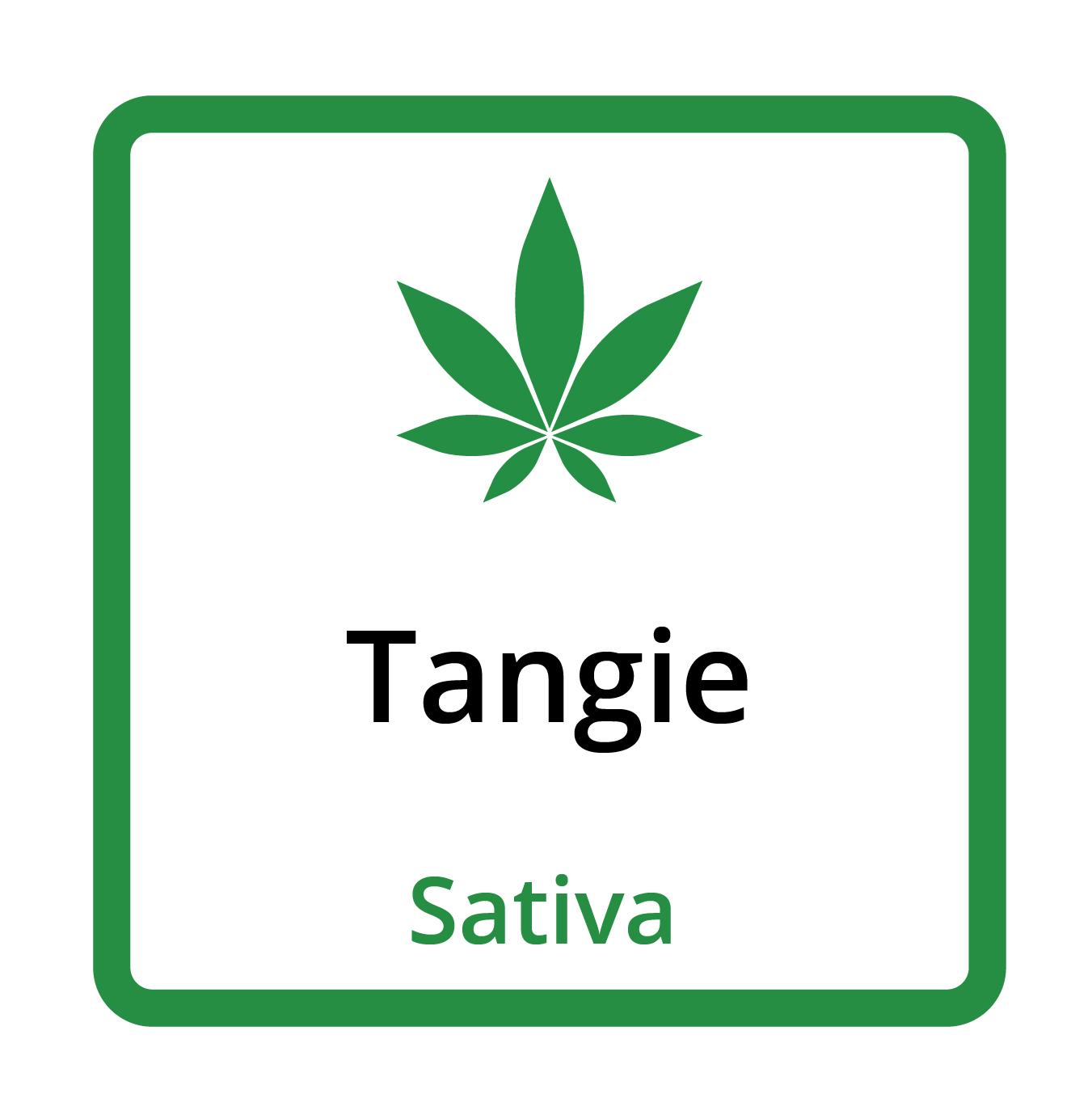 Tangie (Sativa)